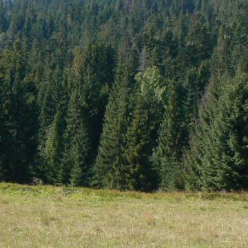 Odległość budynku od lasu – nowe warunki techniczne